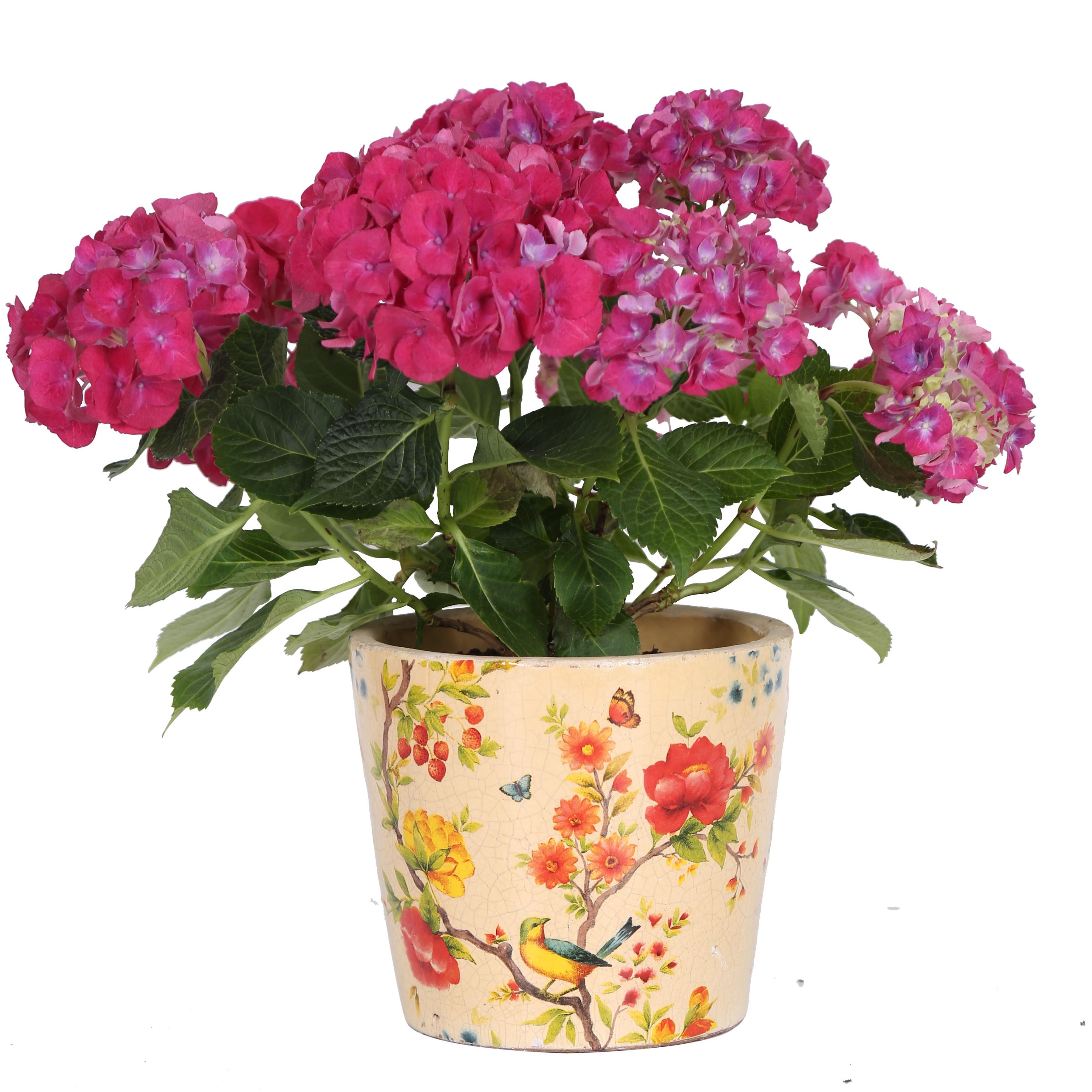 Blumentopf rund bertopf terracotta krakelee glasur for Blumentopf deko